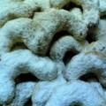 yunanistan kurabiyesi