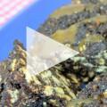 mozaik-pasta-video